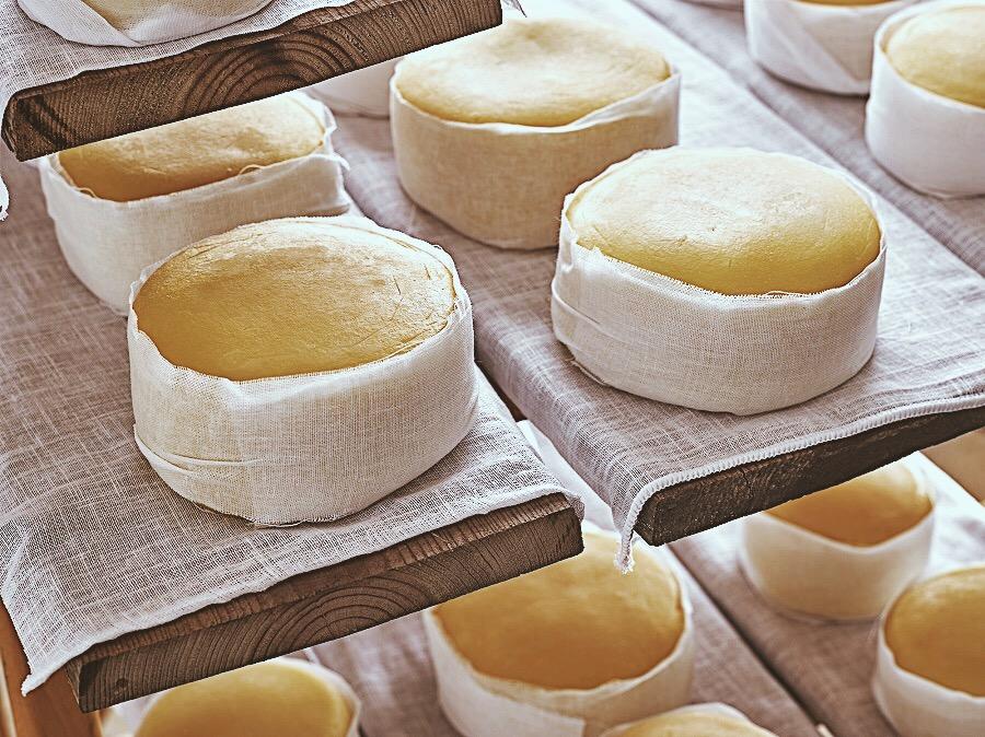 Serra da Estrela cheese