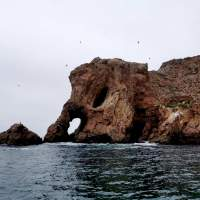 Berlengas island guided tour