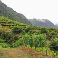 Private Madeira wine tour