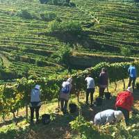 Unique experiences in Douro Valley: for Non-drinkers